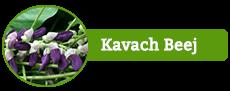 Kavach Beej
