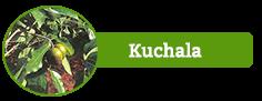 Kuchala