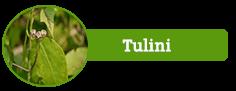 Tulini
