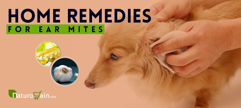 Home Remedies for Ear Mites