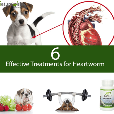 Natural Treatment for Heartworm
