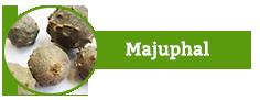 Majuphal, Quercus Infectoria