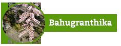 Bahuganthika
