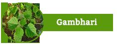 Gambhari
