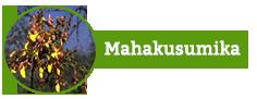 Mahakusumika