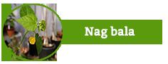 Nag Bala