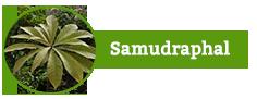 Samudraphal