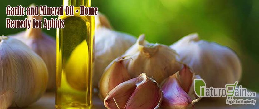 Home Remedy for Aphids