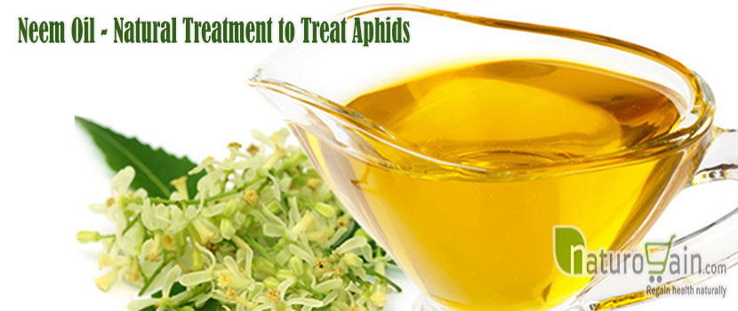 Natural Treatment to Treat Aphids