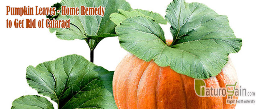 Pumpkin Leaves Remedy to Get Rid of Cataract
