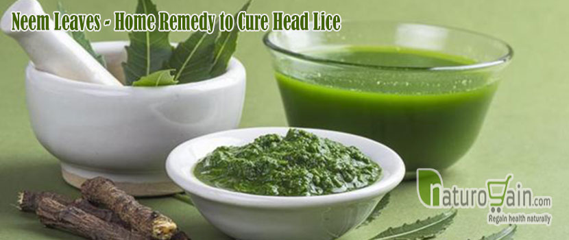Remedy to Cure Head Lice