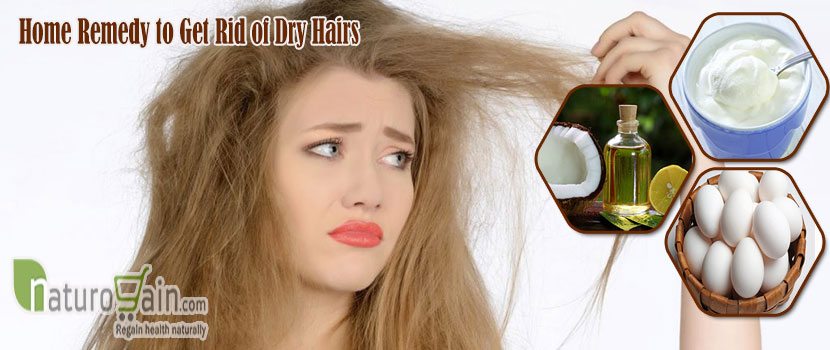 Remedy to Get Rid of Dry Hairs