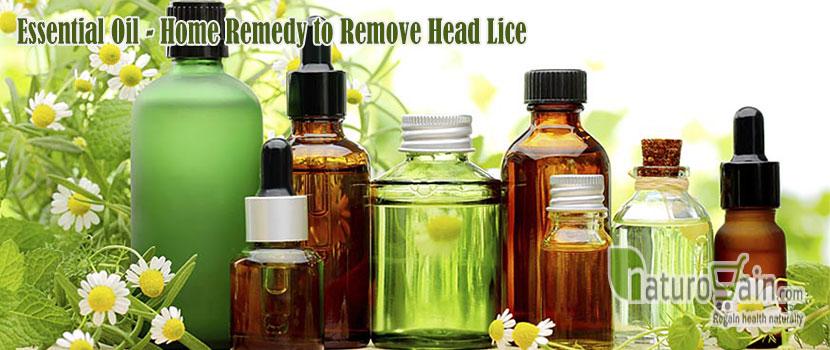 Remedy to Remove Head Lice