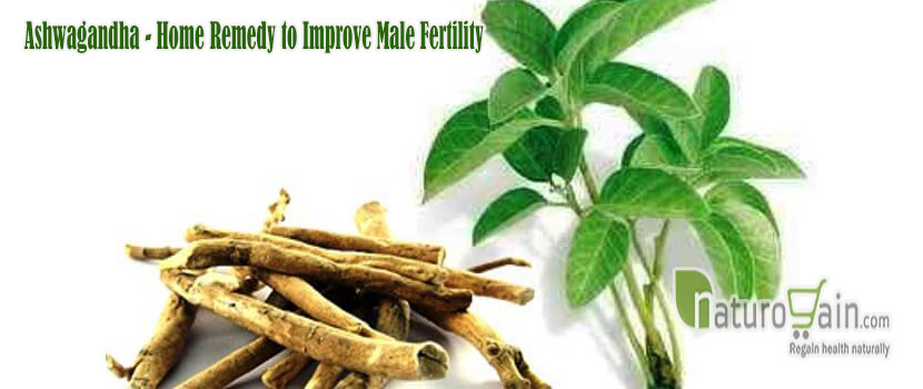 Remedy to Improve Male Fertility