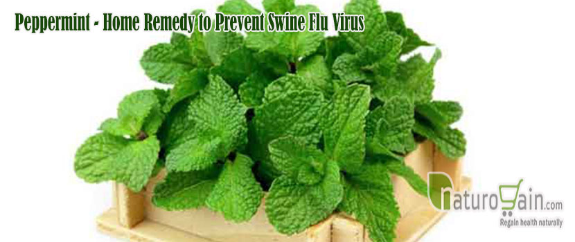 Remedy to Prevent Swine Flu Virus