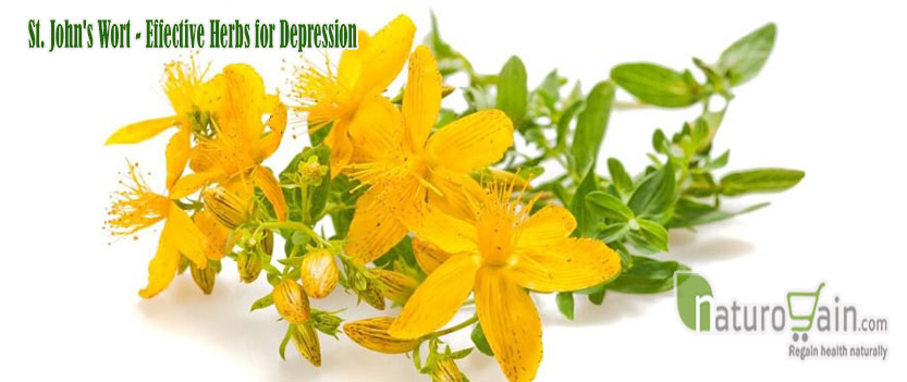 Effective Herbs for Depression
