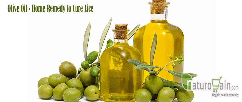 Natural Lice Remedies Olive Oil