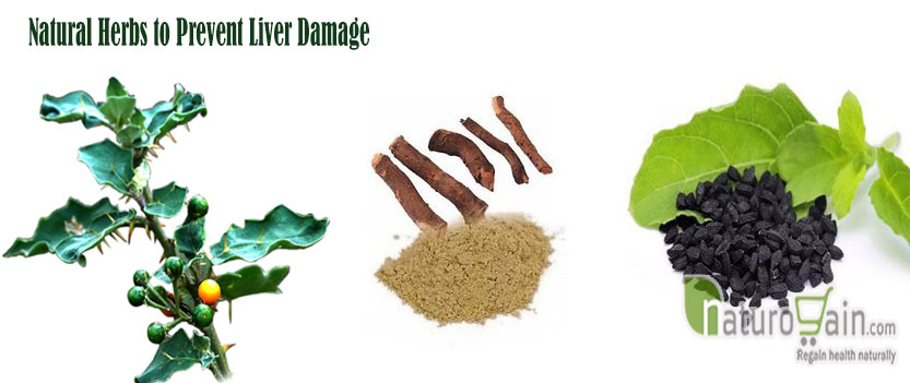 Herbs to Prevent Liver Damage