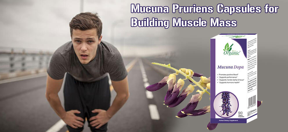 Mucuna Pruriens Capsules for Bodybuilding