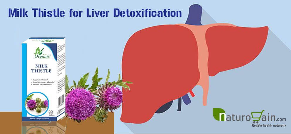 Milk Thistle Supplements for Liver Detox